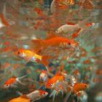 Dove e come comprare un acquario