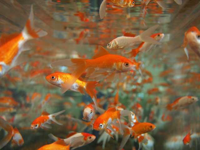 Pesci maschio dating consigli