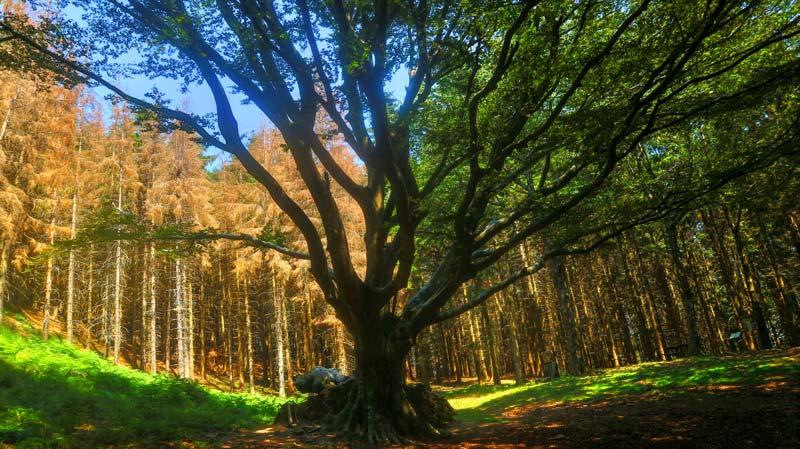 faggione bosco riserva di acquerino