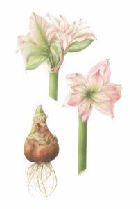 Una mostra di acquerelli botanici con opere di artisti internazionali