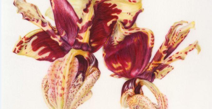 A Villa Bardini acquerelli botanici di artisti internazionali