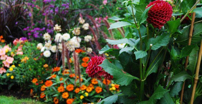 Giardinaggio in Toscana